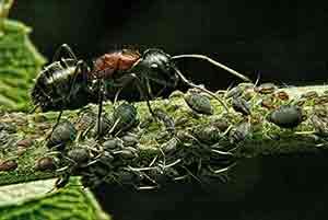 як позбутися мурашок